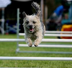 Agility class</br>on Sat 25 November 2017</br>Starts at 09:00