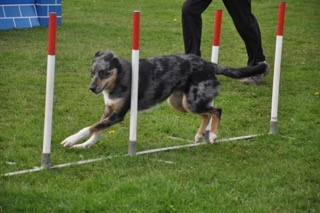 Agility class</br>on Mon 27 March 2017</br>Starts at 18:00