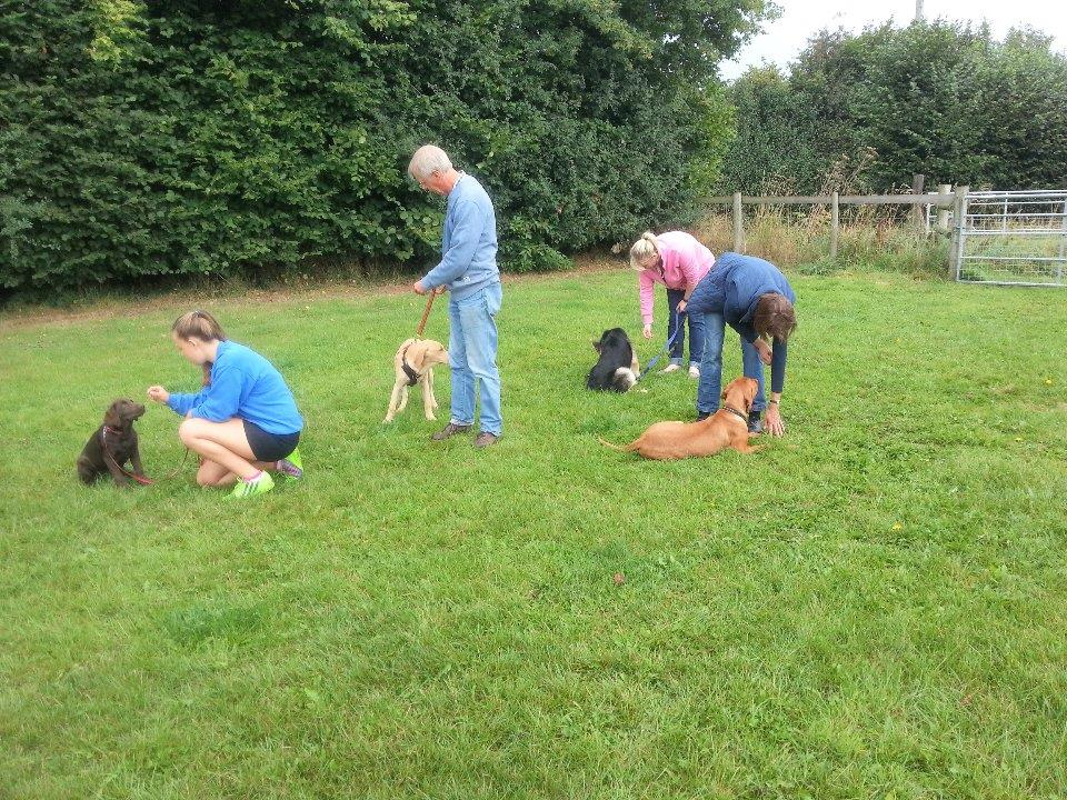 Puppy Class (week 2 of 6)</br>on Sat 25 November 2017</br>Starts at 09:00